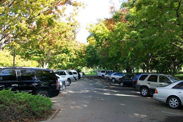 cách chống nắng cho ô tô đậu xe dưới bóng râm