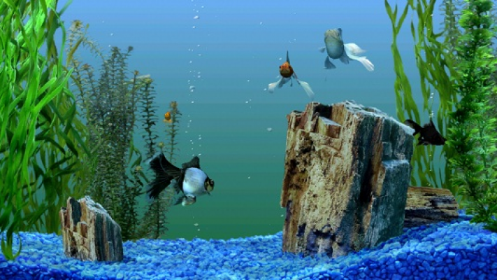 Decal dán kính cho bể cá cảnh