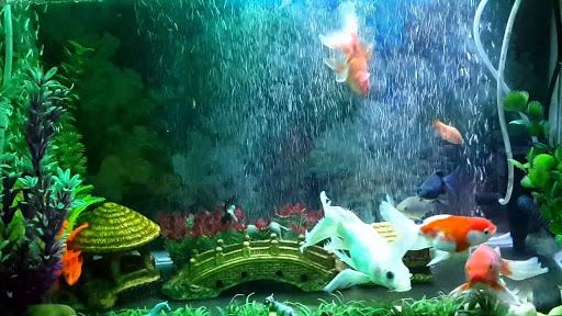 Giấy dán kính cho bể cá
