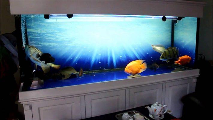 Giấy dán kính bể cá cảnh